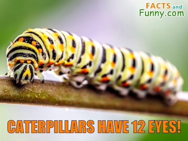 Photo about caterpillars and eyes