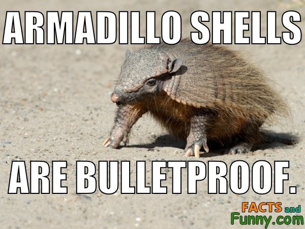 Photo about armadillo and bulletproof